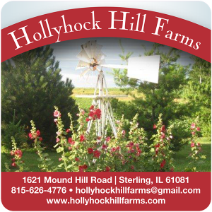 Hollyhock Hill Farms cheese label from Sterling, Illinois.